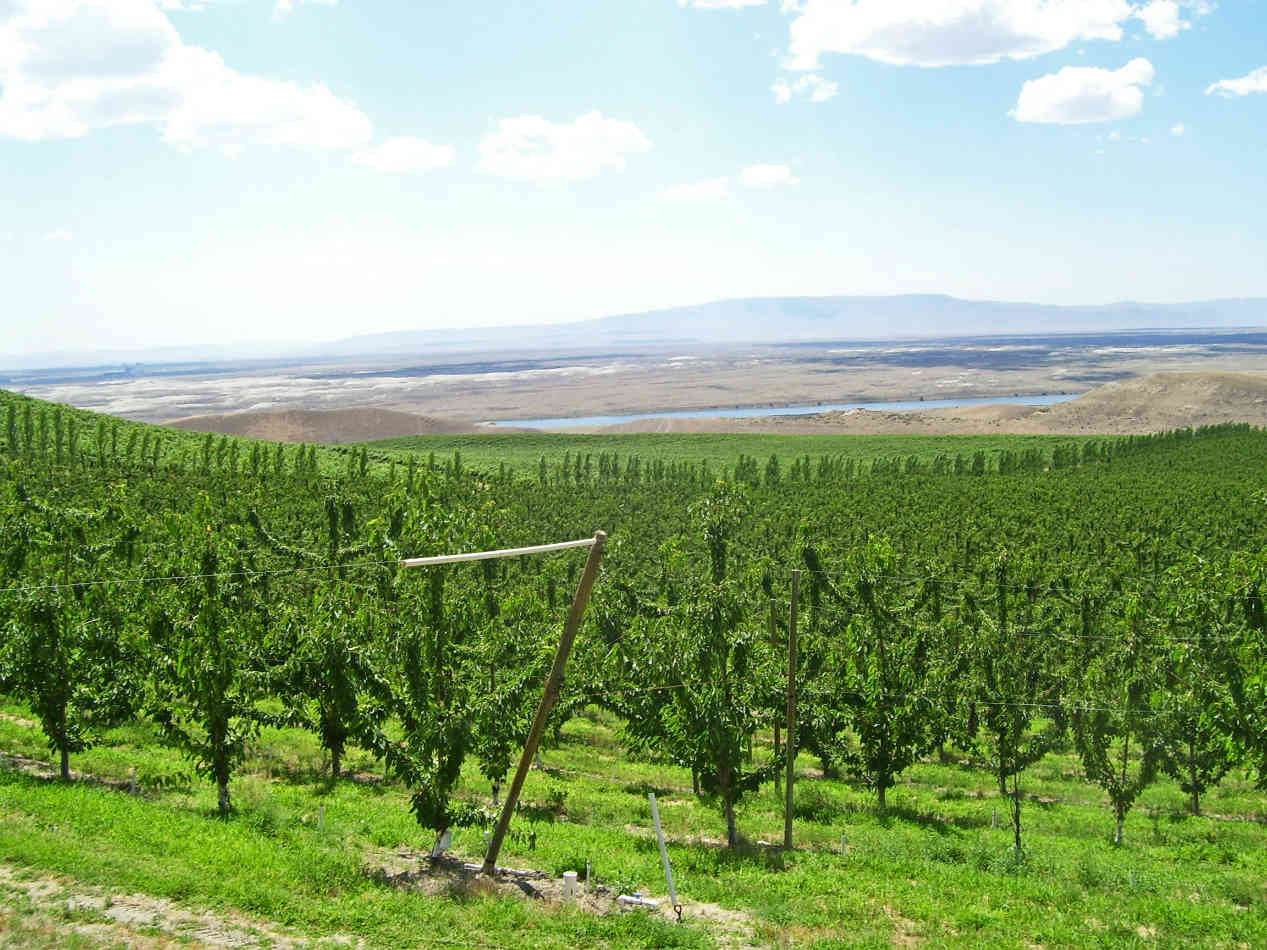 Orchard Wa